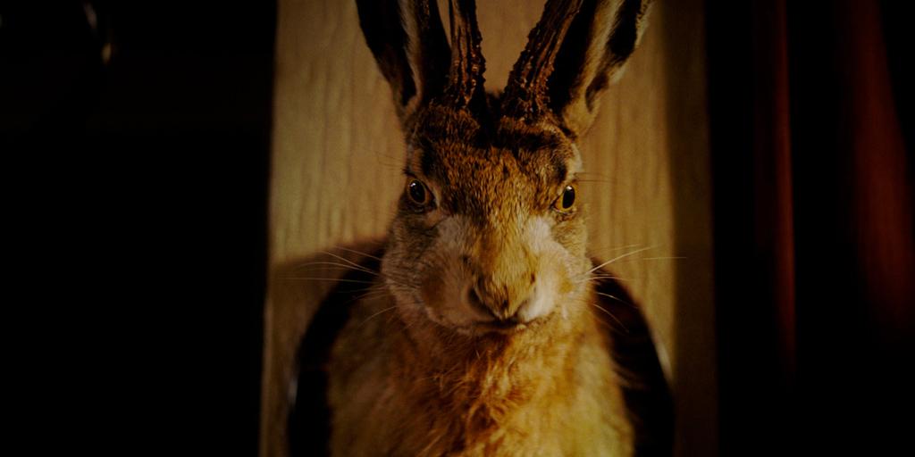 still_hare_hunt